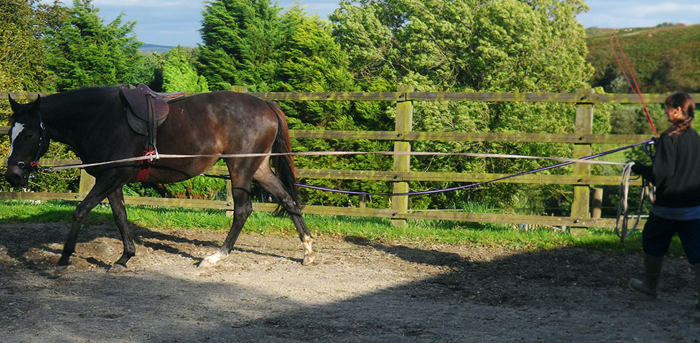 Coral being lunged