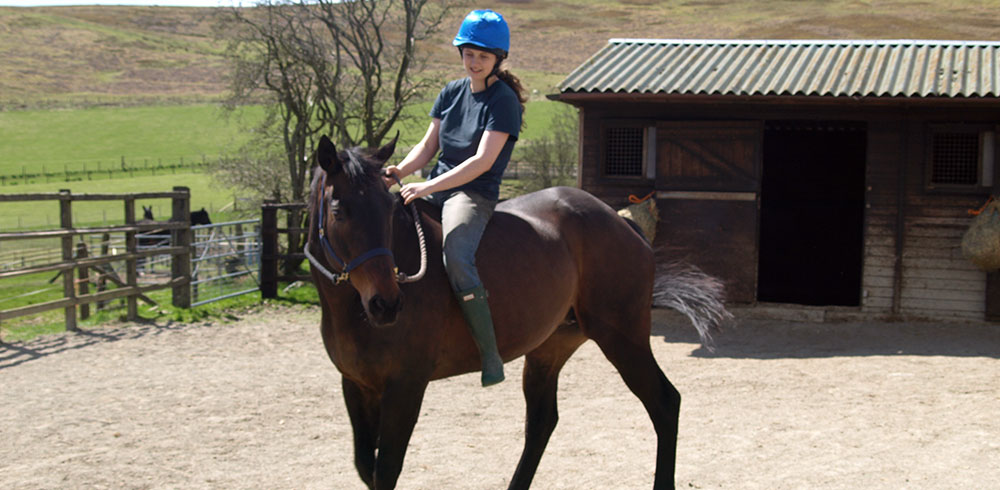 Turn Hill, saddle work in the manege